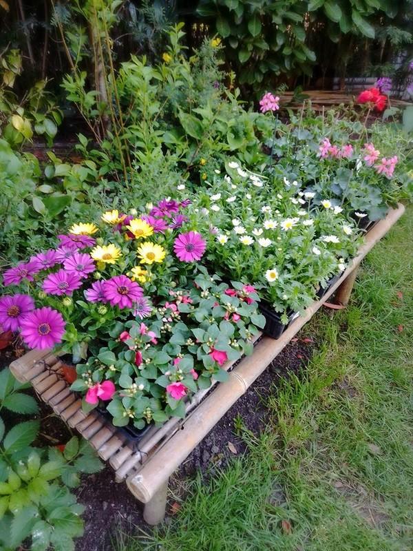 hier  un banc de fleurs à planter