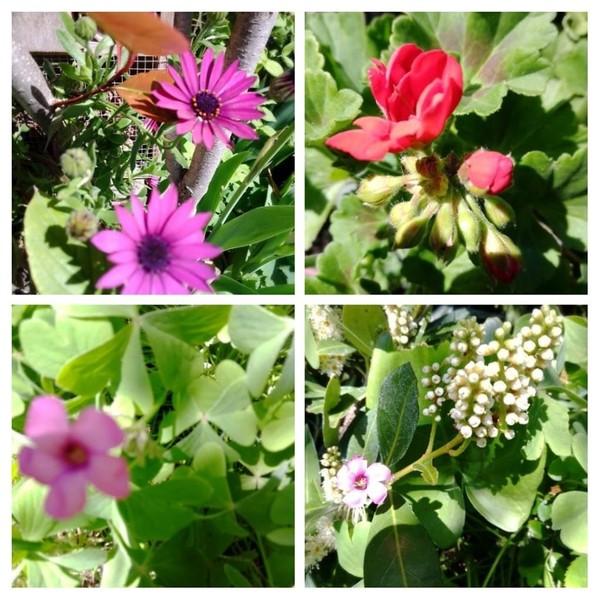 montage fleurs du jardin